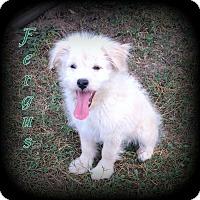 Adopt A Pet :: Fergus - Denver, NC