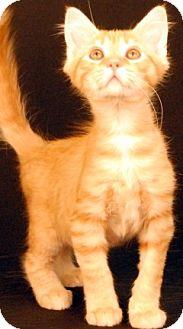 Domestic Mediumhair Cat for adoption in Newland, North Carolina - Pita