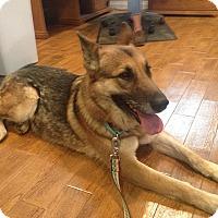 Adopt A Pet :: Sascha - San Diego, CA