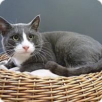 Adopt A Pet :: Bruno - Pasadena, TX