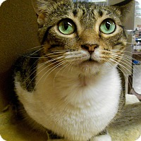 Adopt A Pet :: Eliza - Chattanooga, TN
