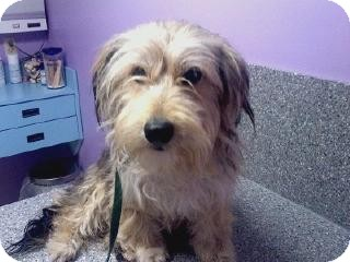 Terrier (Unknown Type, Medium) Mix Dog for adoption in Youngstown, Ohio - Oliver ~ Pending Adoption