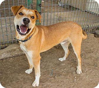 BENNETT | Adopted Dog ...