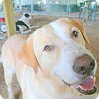 Adopt A Pet :: Samson - Katy, TX