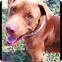 Adopt A Pet :: Reece - Meridian, MS