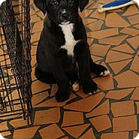 Adopt A Pet :: Dusty - Sylvania, GA