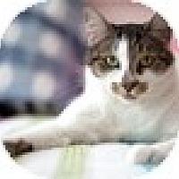 Adopt A Pet :: Sufi - Vancouver, BC
