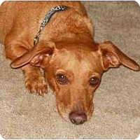 Adopt A Pet :: Buster Brown - Bryan, TX