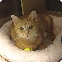 Adopt A Pet :: MacKenzie - Colmar, PA