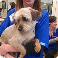 Adopt A Pet :: Jamie - Simi Valley, CA