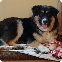 Adopt A Pet :: Jayla - Elk River, MN
