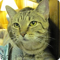 Adopt A Pet :: Sally - Covington, KY