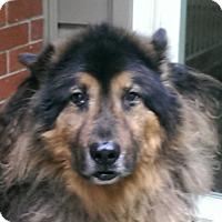 Adopt A Pet :: Beao - Sterling Hgts, MI