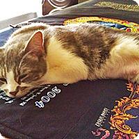 Adopt A Pet :: Wink - N. Billerica, MA