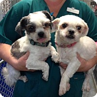 Adopt A Pet :: Pedro & Polly - Irmo, SC
