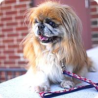 Adopt A Pet :: Pal-Adopted! - Detroit, MI