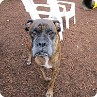 Adopt A Pet :: Buzz - in Maine - kennebunkport, ME