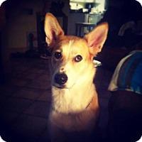 Husky/Collie Mix Dog for adoption in Laval, Quebec - Mandy