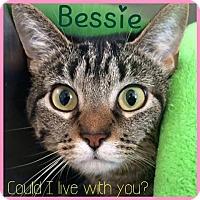 Adopt A Pet :: Bessie - Lafayette, IN