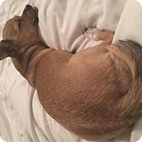Adopt A Pet :: Ziggy - Hope Mills, NC