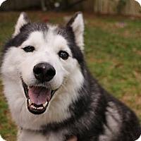 Adopt A Pet :: Josie - Windermere, FL