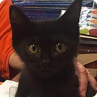 Adopt A Pet :: Teddy - Phillipsburg, NJ