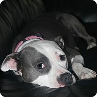 Adopt A Pet :: FLOWER - Knoxville, TN