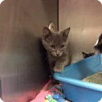 Adopt A Pet :: Michaelangelo - Janesville, WI