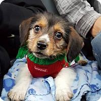 Adopt A Pet :: Marlo - Sugar Grove, IL