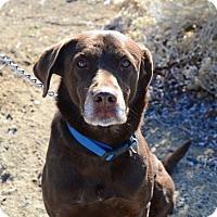 Adopt A Pet :: Jack - Gardnerville, NV