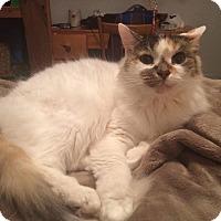 Adopt A Pet :: Ellie - Lindsay, ON