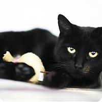 Adopt A Pet :: Mavis - Lincoln, CA