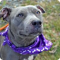 Adopt A Pet :: Rachel - New Castle, DE