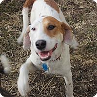 Adopt A Pet :: Ginger - Joliet, IL