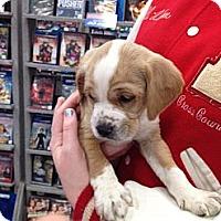 Adopt A Pet :: Noah ~ Adoption Pending - Youngstown, OH