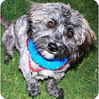 Adopt A Pet :: Zephyr - Gilbert, AZ