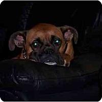 Adopt A Pet :: Nicholas - Thomasville, GA