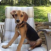 Adopt A Pet :: Lexi - Randolph, NJ
