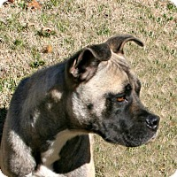 Adopt A Pet :: Isabella - Lufkin, TX