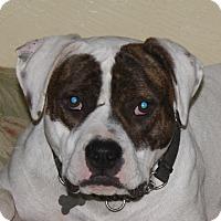 Adopt A Pet :: Ben - Sacramento, CA