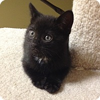 Adopt A Pet :: Romero - Island Park, NY