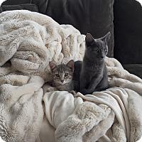 Adopt A Pet :: Mina (& Luke) - Arlington, VA