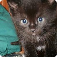 Adopt A Pet :: Gumball - Hamilton, ON