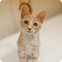 Adopt A Pet :: Evan - Salisbury, NC