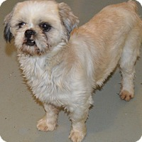Adopt A Pet :: Katrina - Prole, IA