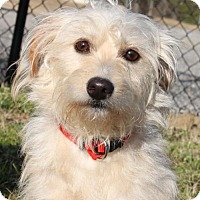 Adopt A Pet :: Laura - Washington, DC