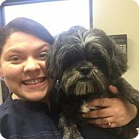 Adopt A Pet :: Shih Tzu Boy **Foster Needed** - Christiana, TN