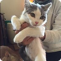 Adopt A Pet :: Emily - Covington, KY