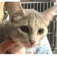 Adopt A Pet :: Iris - Springdale, AR
