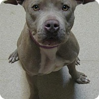 Adopt A Pet :: Mya - Gary, IN